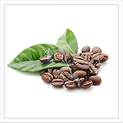 Купить свежеобжаренный кофе москва